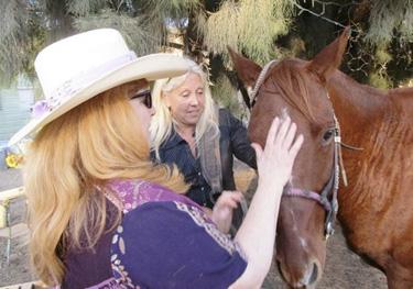 chiro-horses